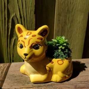 Jaguar Animal Planter with Succulent